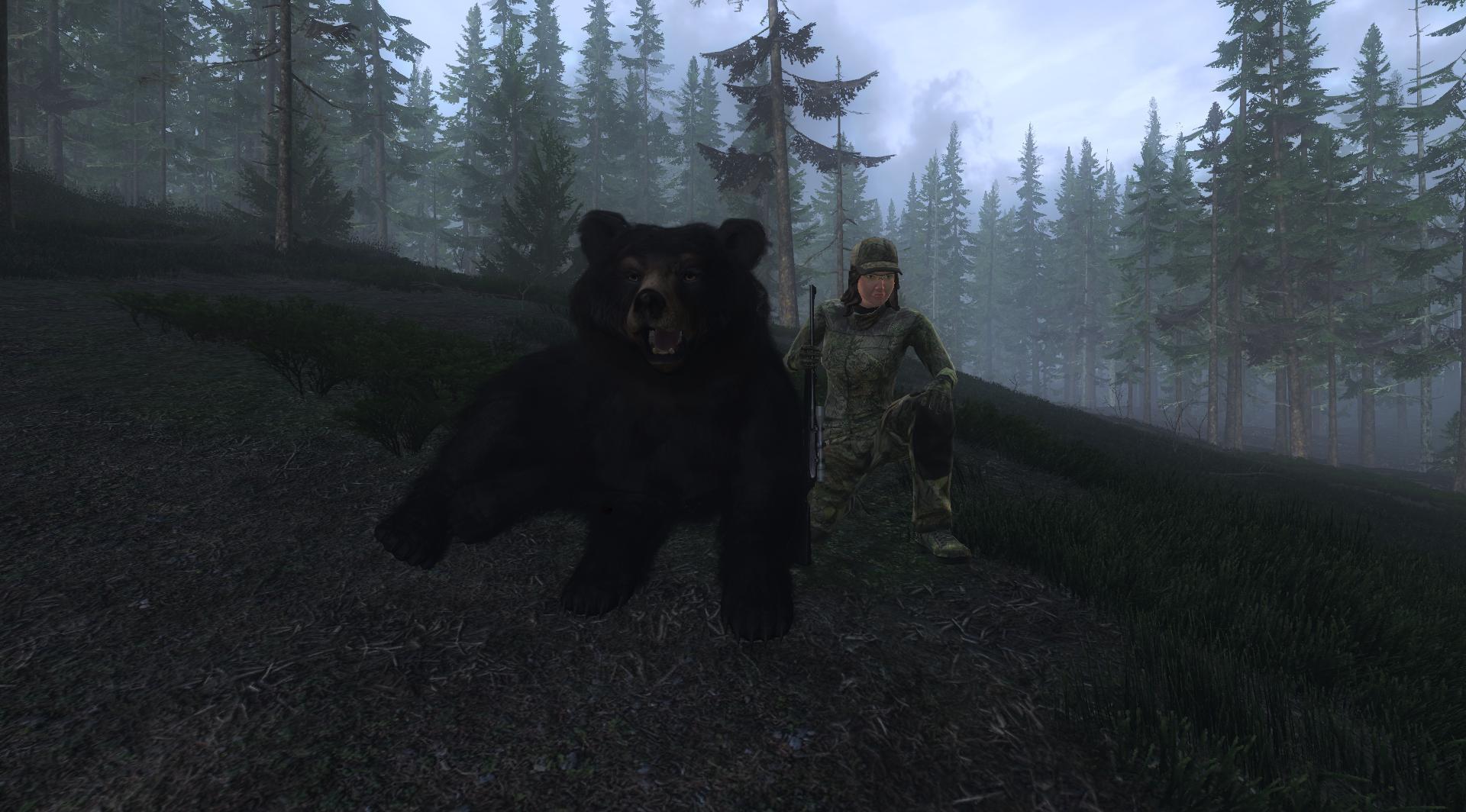 TOP 5 Black Bear // Oso Negro 1dbca23d726b14a8ff63561338231f120ef9b6c1