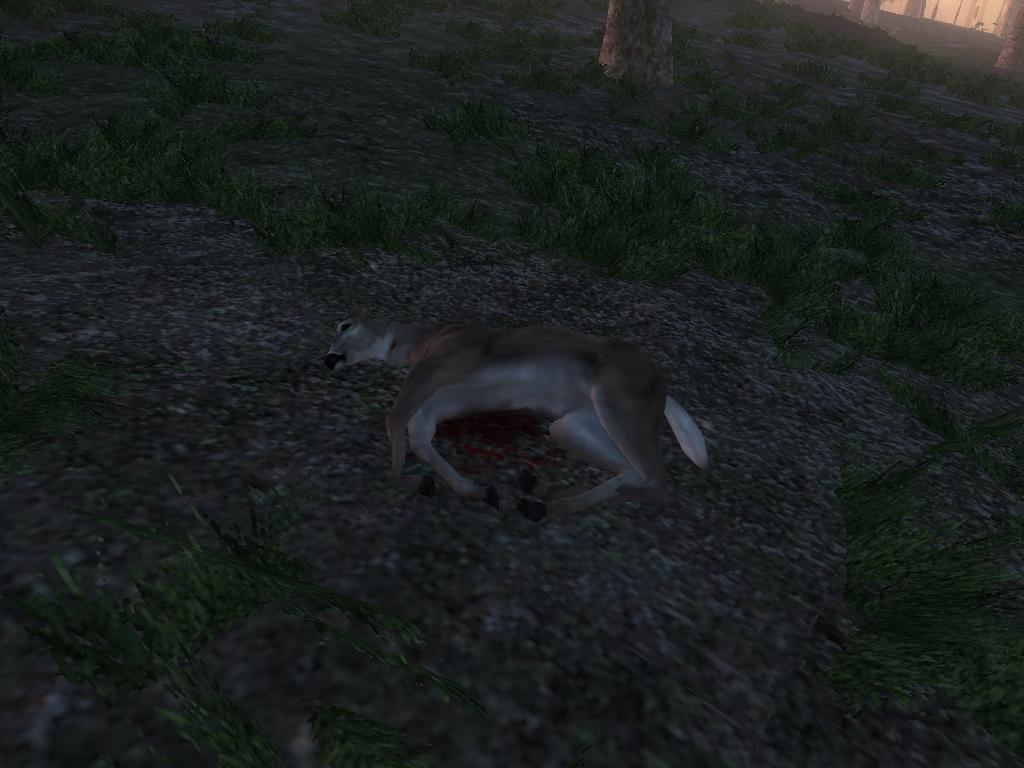 cervo coda bianca 35e8c931eea9ed0dc82fdef233891fd621458878