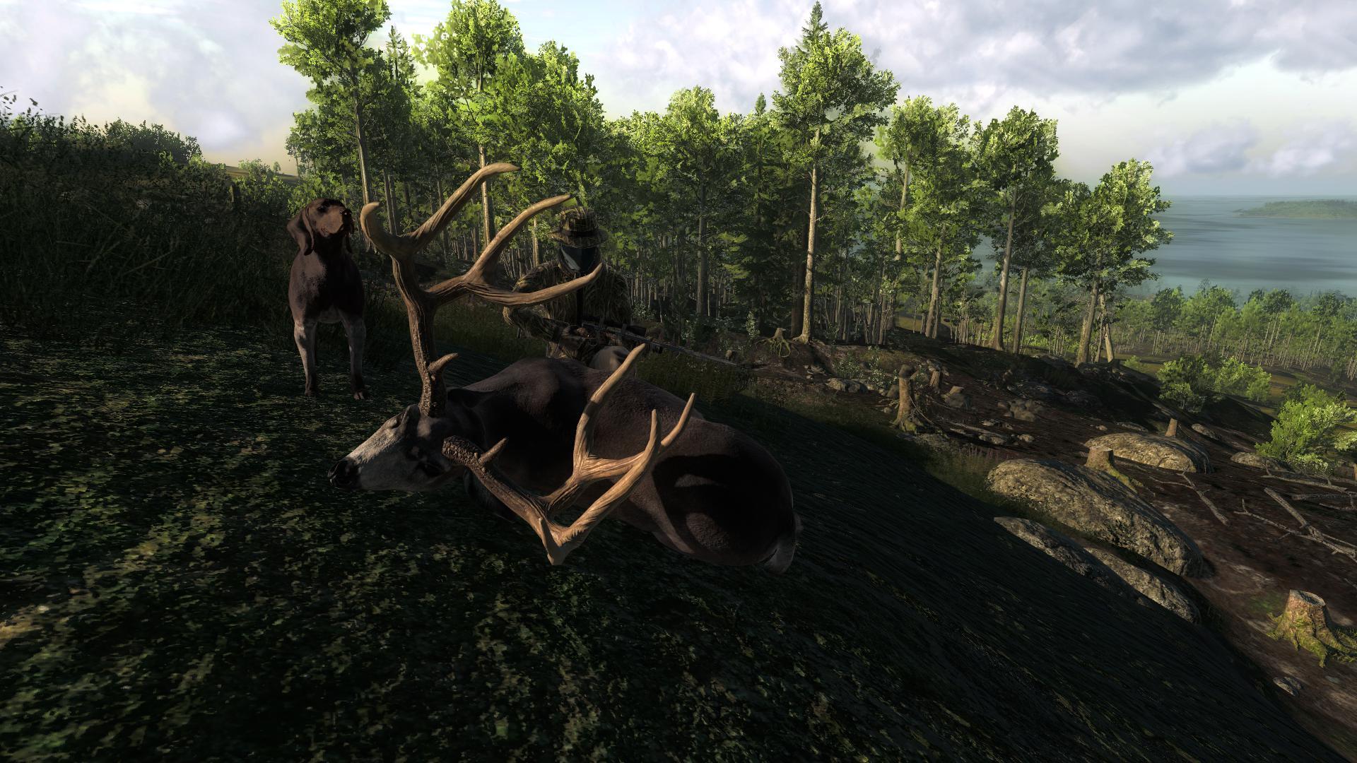 TOP 5 Mule Deer // Ciervo Mula (Typical) 74d1c7adcad51dfefb3381c75a42586d1eff7e77
