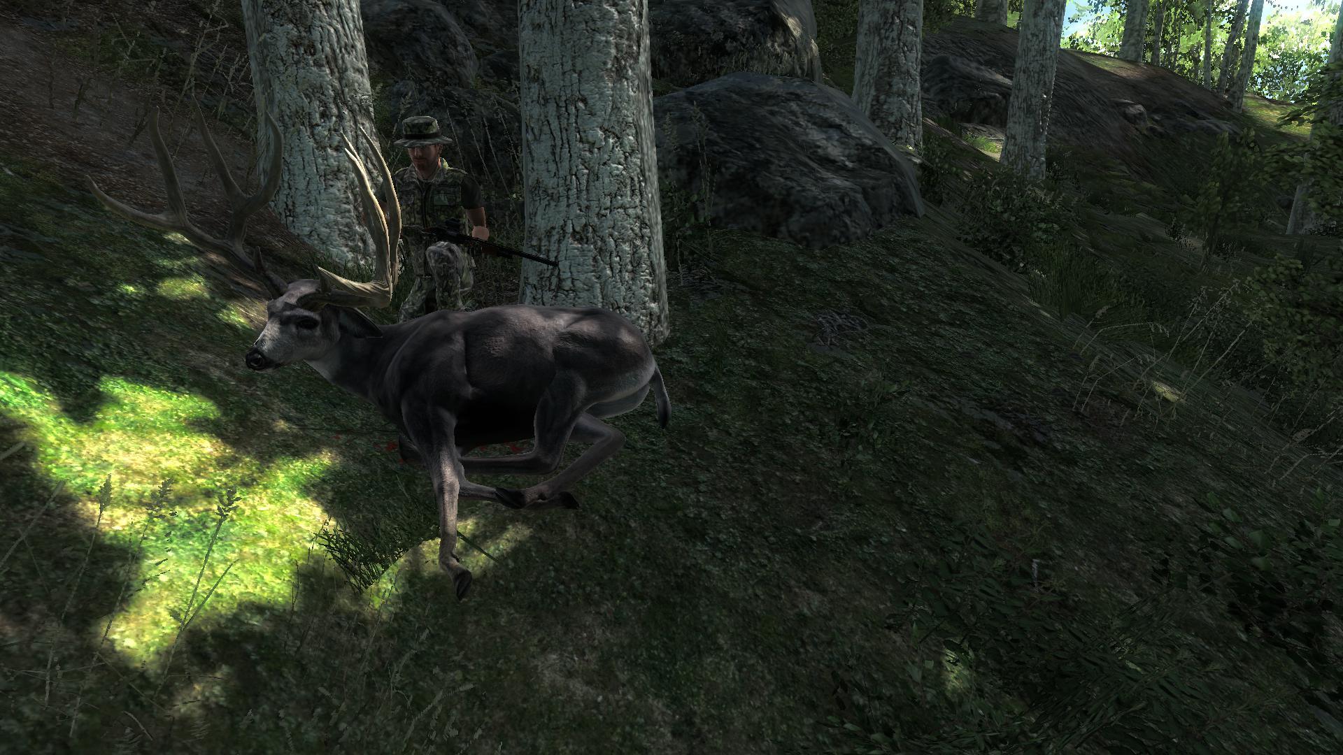 TOP 5 Mule Deer // Ciervo Mula (Typical) Cfac8bdd0649c7e1921ffddf7aa9916815fd0b2e