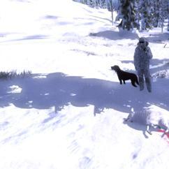 TOP 5 Artic Fox // Zorro Ártico 4809120b6ce84efdaef64f42eddf3d3693d4e1d8